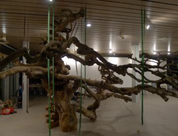 "23 Ausstellungsaufbau ""Tepidarium"" (Jochen Dehn)"