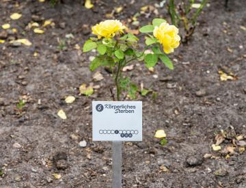 9 Mathias Lempart, Installation im Gartendenkmal